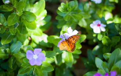 La naturaleza, nuestro hogar: sentir, conectar y cuidar